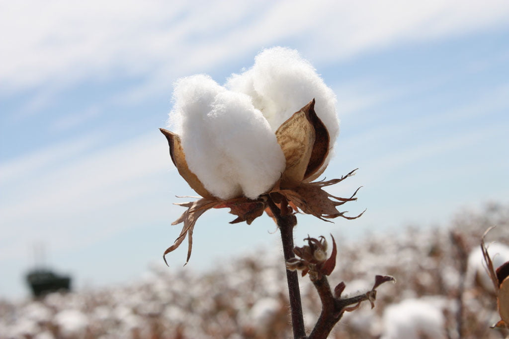 Turkish Cotton: What is all the fuss about?